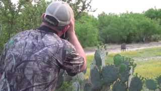 South Texas Hog Hunting at the Callaghan Ranch: Part One