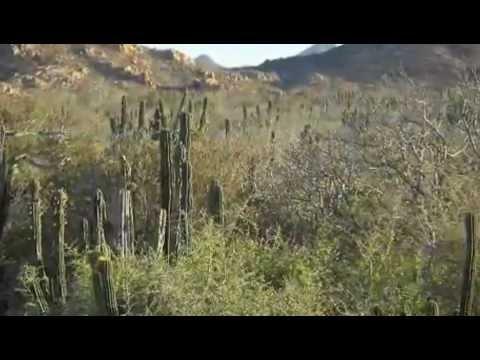 Biodiversity of Cabo Pulmo