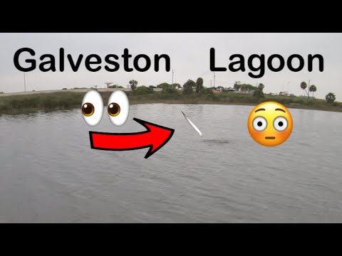 Almost Skunked Then This Happens / Galveston Lagoon