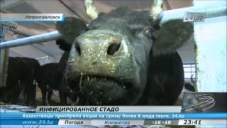 Понос у коровы: чем лечить и что делать