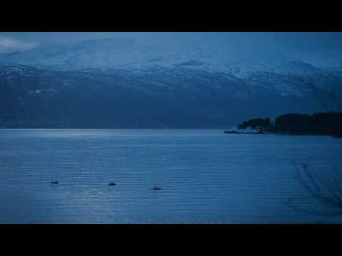 Orcas in Balestrand of Norway - Sognefjord