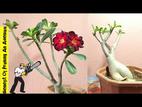 Effect Of Pruning