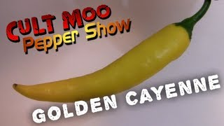 Golden Cayenne - Pepper Show - Ep.18