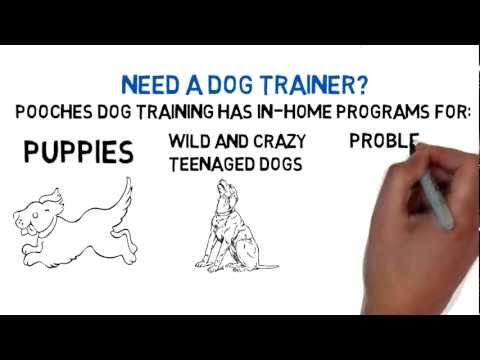 Dog Obedience Training Woodbridge NJ - FREE CONSULT - 800-906-1560