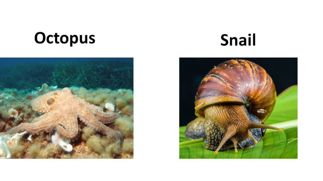 Image of: Porifera Biology Animal Kingdom Diversity In Living Organisms Part English Youtube Biology Animal Kingdom Diversity In Living Organisms Part