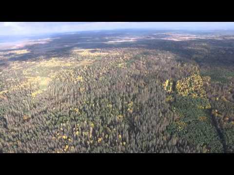 Puszcza Białowieska drzewostan zniszczony przez kornika drukarza - czerwony świerk