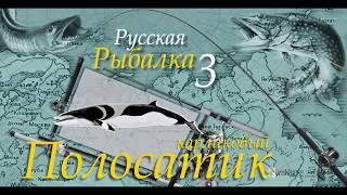 Русская рыбалка 3 99 Полосатик карликовый
