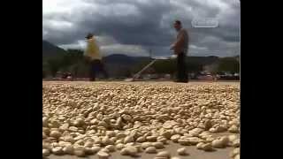 Кофе в зернах «Матагальпа» (Никарагуа)(Кофе в зернах «Матагальпа» (Никарагуа) http://tributecafe.ru/kofe-v-zernakh-matagalpa-nikaragua., 2015-11-07T11:58:51.000Z)