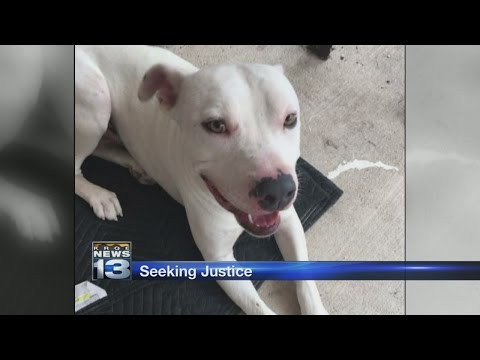 Family wants justice for dog shot at Albuquerque apartment complex