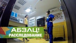 Джакузи для хвостатых: отели для собак по-украински! - Абзац! - 20.09.2017