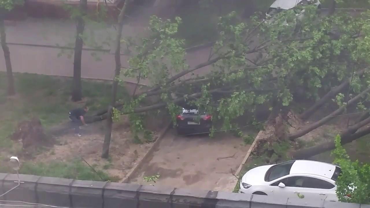 Сильный ветер в Москве валит деревья