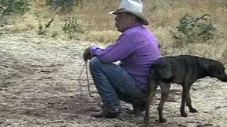 Strawberry Roan A Video Portrait of Arizona Cowpuncher Mike Landis