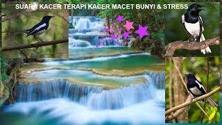 Download Mp3 Terapi Ampuh Burung Kacer Macet Bunyi & Stress Agar Kembali Berkicau