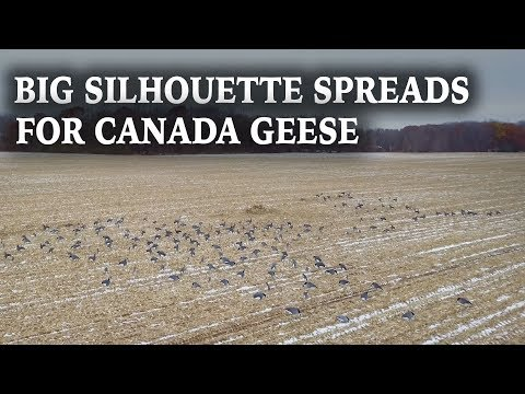 Big Spreads For Canada Geese | Silhouette Decoys