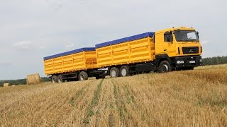Зерновоз МАЗ-6501А8 Колос в динамике