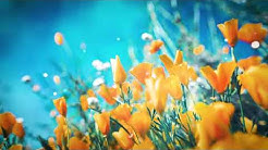 Relaxing spring sounds with peaceful music | Spring background video