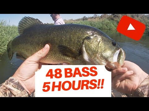 48 Bass 5 Hours | Great Bass Fishing | Arizona Bass Fishing | Yuma AZ Fishing | Harvestlad Tv Fish