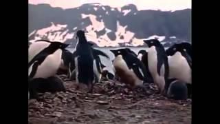 Шокирующие факты Жак Ив Кусто  Антарктика