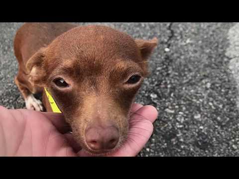 MuttNation Foundation Hurricane Harvey Rescue