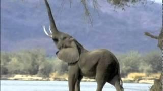 Wesley Willis - Suck an Elephant