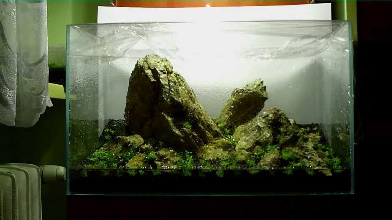 Moving Aquarium Decorations
