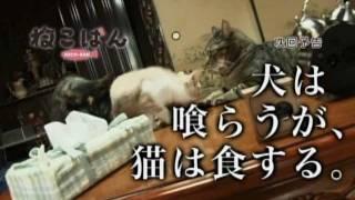 『ねこばん』第7回―犬は喰らうが、猫は食する。 2010年10月スタート、伊...