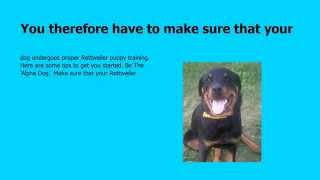 +++ Potty Training Rottweiler Puppies
