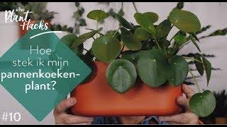 elho Plant hacks #10 Pannekoekenplant