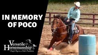 🔴 IN MEMORY OF POCO (live-stream) // Versatile Horsemanship