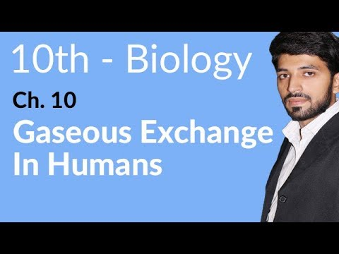 Gaseous Exchange in Humans - Biology Chapter 10 Gaseous Exchange biology - 10th Class.