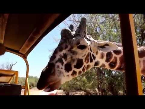 Out of Africa Wildlife Park Camp Verde Arizona