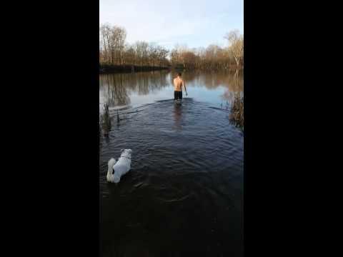 Schwimmen im Winter
