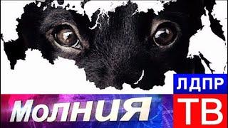 Закон о защите животных нужен сейчас! Молния от 15.11.17