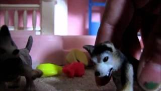 Schleich wolf movie part 4 ( Pig and a White Tiger? )