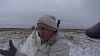Охота на зайца в Казахстане в ноябре 2018