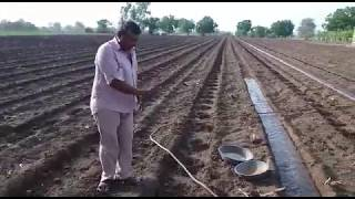 ગૌ આધારિત 'ઝીરો બજેટ' શેરડી ની ખેતી - Organic Sugarcane Farming