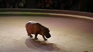 Прикол!!!Случай в цирке весёлый бегемот