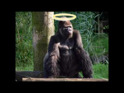 Filthy Frank's Harambe Tribute Song 1 Hour