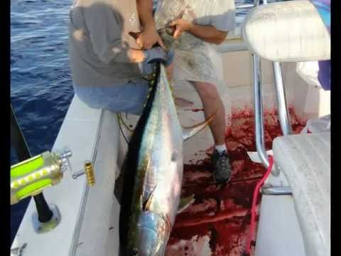 Tuna Marlin Rig 2011 Offshore Fishing Gulf of Mexico