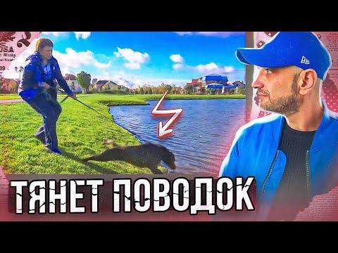 Вопрос: Заставлять ли собаку идти вперед, если она рычит в пустоту?