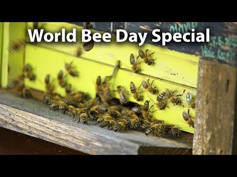 Honey Bee Importance and Slovenia - World Bee Day Special