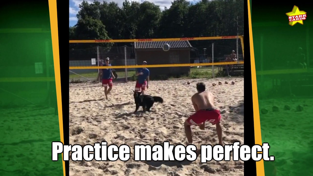 Kiara the Norwegian volleyball dog flashes skills on par with her two-legged friends