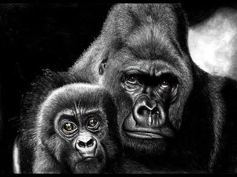 Drawing a Gorilla with Cub