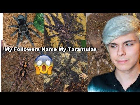 My Twitter & Instagram Followers Name My Tarantulas!