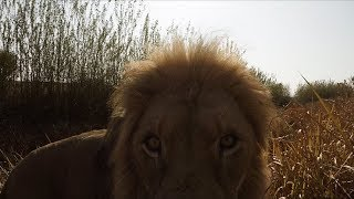 Look How EXCITED They Are! | The Lion Whisperer