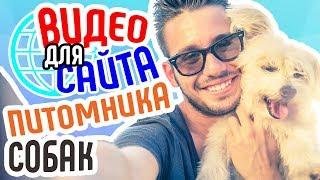 Видео для сайта питомника собак Видеореклама питомника собак Увеличение продаж на сайте питомника
