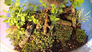 DIY - Forest In A Jar - Eternal Green Terrarium