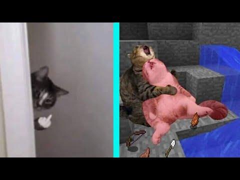 BEST DANK CAT MEMES COMPILATION OF 2020 PART 11 (from TikTok)