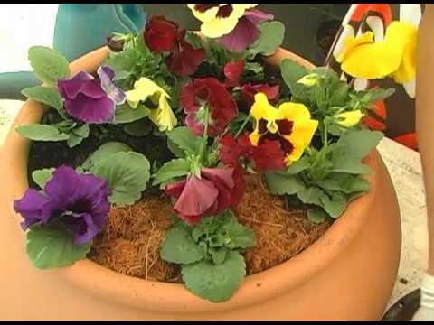 Paisagismo jardins como montar um vaso de flores de - Plantas de jardin ...