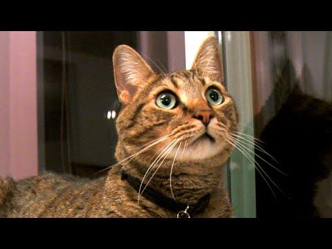Cats Explore NEW HOME in Alaska!